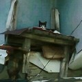 Photos: 頭上遠くから視線を投げかけてきた猫