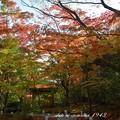 松島円通院