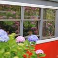 Photos: 箱根登山鉄道と紫陽花