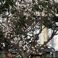 Photos: 梅屋敷公園