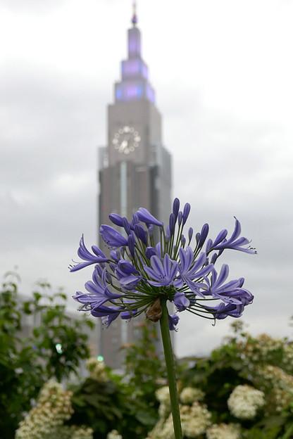 写真: 花とドコモタワー