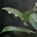 写真: 雨上がりの朝