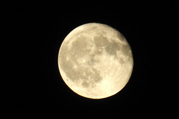Photos: 満月をちょい過ぎた月