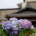 Photos: お散歩写真