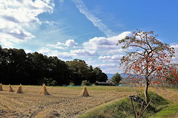 秋の空と柿
