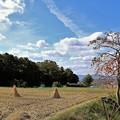 写真: 秋の空と柿
