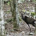 写真: 鹿!