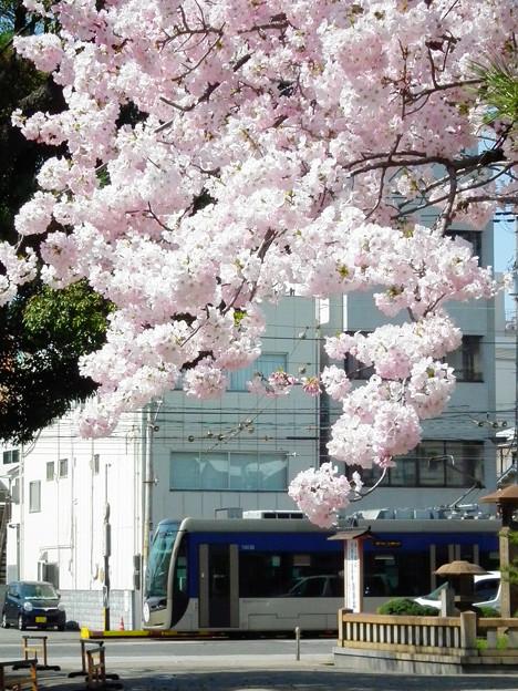 桜と1003