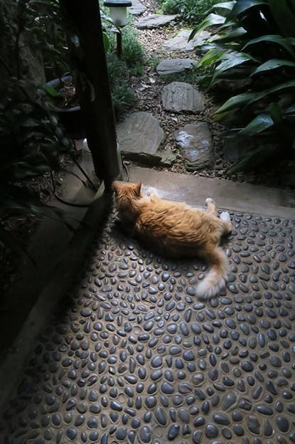 物憂げな猫