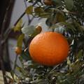 柑橘ワイド風に