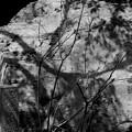 石の上に 影