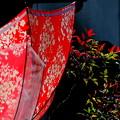 雨上がりのアンブレラ&南天の葉