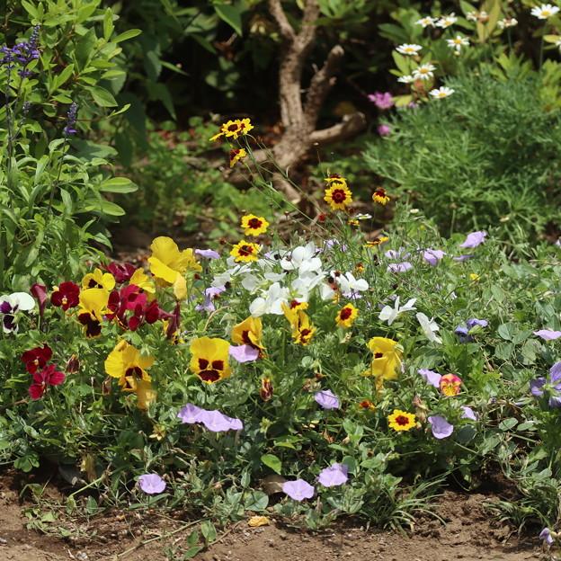 プチフラワー花壇
