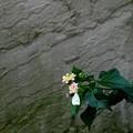 小さな花にモンシロが