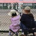 少年野球観戦