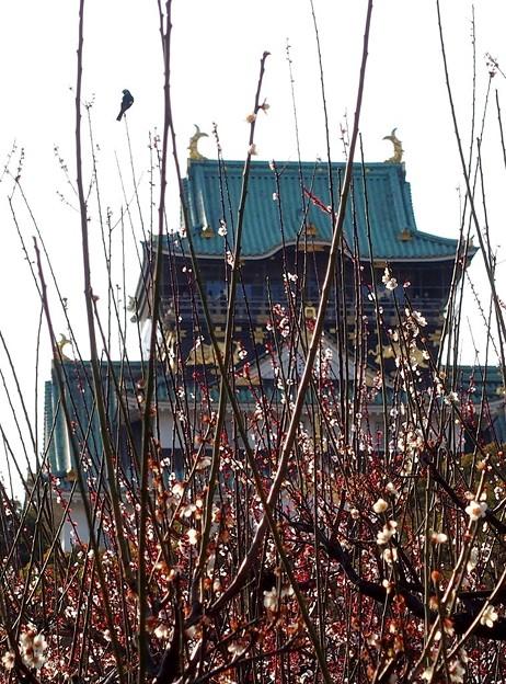 ヒヨちゃんと大阪城
