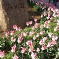写真: 花の道