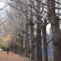 Photos: 並木