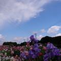 写真: 百花繚乱
