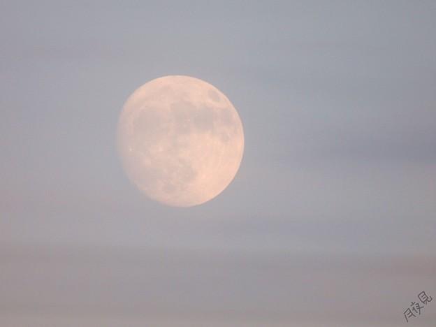 Photos: 夕の月
