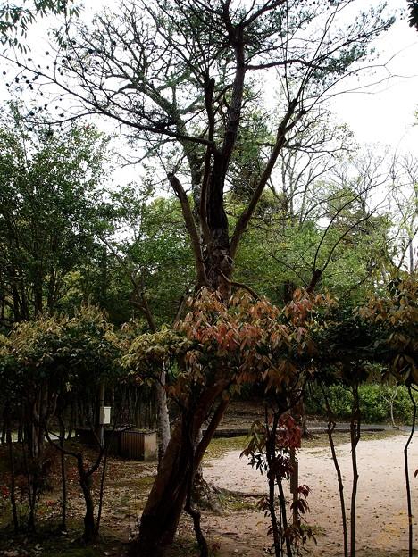 不思議な木