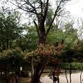 Photos: 不思議な木