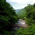 Photos: 祖谷のかずら橋