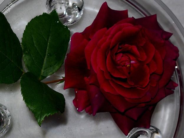 水盤のバラ