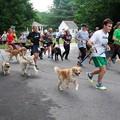 5K Race Dogs 8-22-15