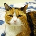 Kitty 8-30-15