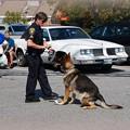 K-9 Dog 9-19-15