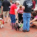 写真: Dog Day 8-22-15