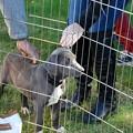 Photos: Puppy Pen 10-3-15