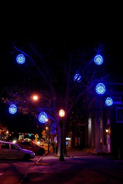 Blue Tree 12-6-15
