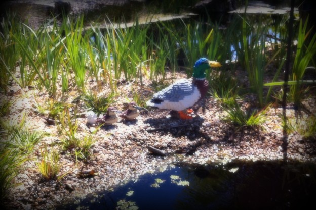 Photos: Ducks 2-18-16