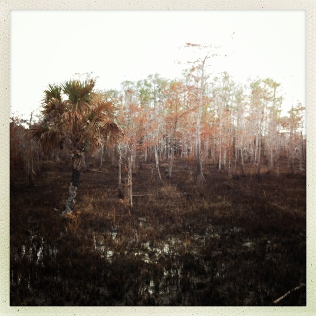 Burning Big Cypress 3-26-16