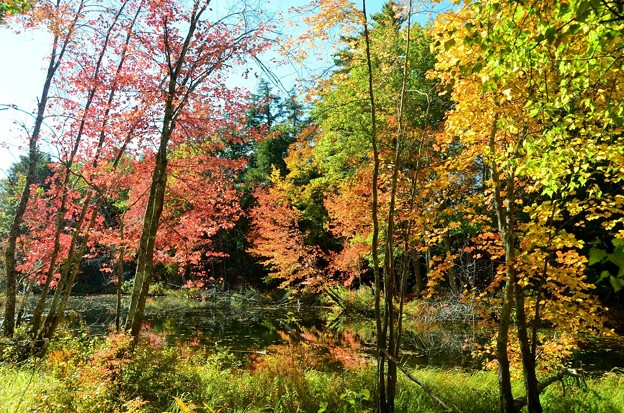 Photos: A Pond in the Woods 10-20-17