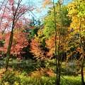 写真: A Pond in the Woods 10-20-17