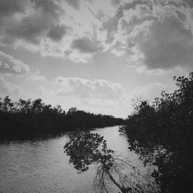 Mangrove 1-7-18