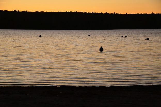 写真: Sebago Lake Basin 10-20-17