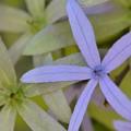 Queen's Wreath I 3-11-18