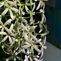 写真: Queen's Wreath II 3-11-18