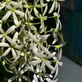 Queen's Wreath II 3-11-18