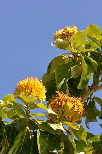 Golden Bouquet Tree 2-25-18