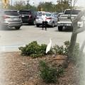 Photos: Cattle Egret 3-31-18