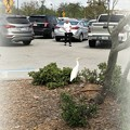 Cattle Egret 3-31-18