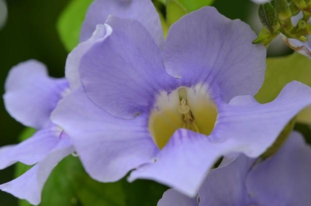 Blue Sky Vine I 5-16-18