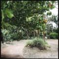 Sandy Path 5-16-18