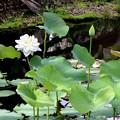 写真: White Lotus 6-3-18
