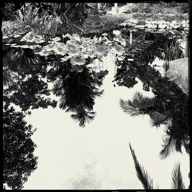 写真: White Lotus I 6-17-18